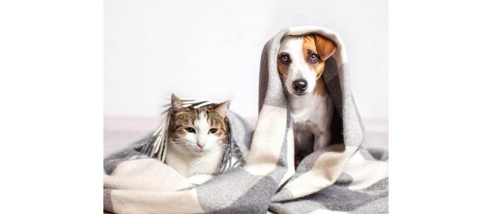 Czy koty mogą zarażać koronawirusem?